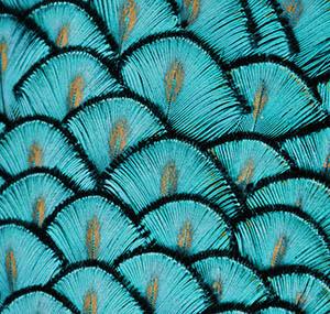 Ispirazione illusione decorazione piume pavone