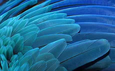 Ispirazione illusione decorazione piume blu macro