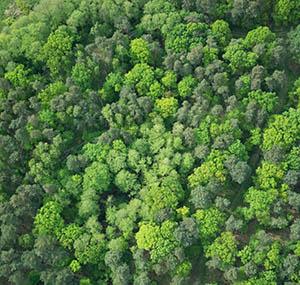 Ispirazione cielo terra decorazione cima albero