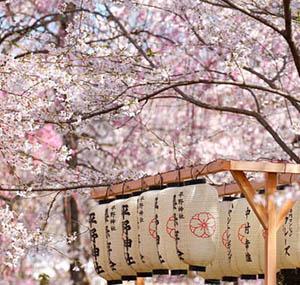 Ispirazione decorazione fiori ciliegio giappone