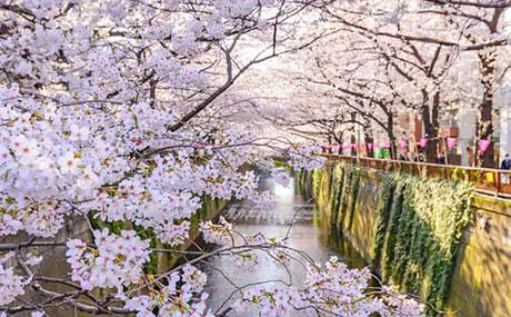 Ispirazione decorazione fiori fiume