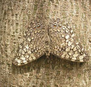 Ispirazione illusione decorazione farfalla